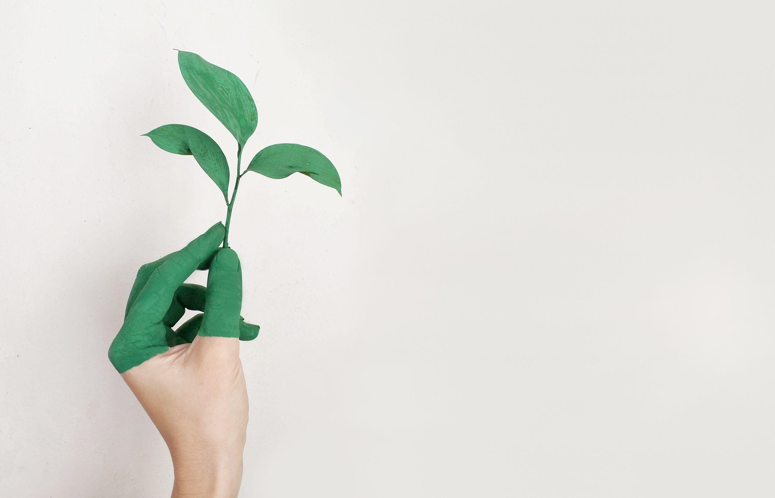 Hand Holding Leaf, Symbol of Sustainability